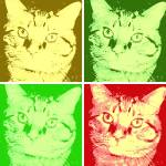 """Orange Tabby Cat Pop Art"" by crazyabouthercats"