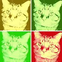 Orange Tabby Cat Pop Art