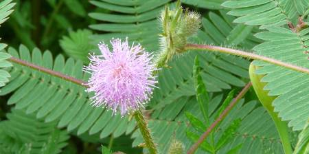 Cotton Thread Flower