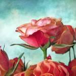 """Skyward"" by JessicaJenney"