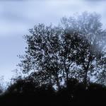 """""""trees in fog"""" by create4fun"""