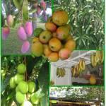 """Sample Work:  FrutasFruits"" by BoqueronPuertoRico"