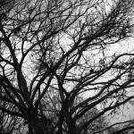 """B-W trees"" by create4fun"