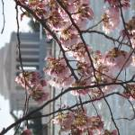 """f washington dc cherry blossom photo 2009 n-143"" by dcphoto"