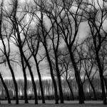 """""""treeline"""" by jurgen"""