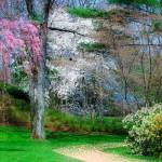 """Spring Impressions"" by DianaLeePhotoDesigns"