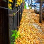 """Fall on a Sidewalk"" by DianaLeePhotoDesigns"