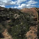 """""""Dead Tree Landscape"""" by ReptilesandRenderings"""