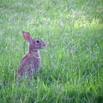 """""""Baby Bunny"""" by BrendaMvisions"""