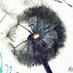 """""""Dandelion Blow-Flower in Purple on White"""" by DouglasGriffin"""