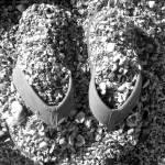 """Sandals"" by LittleSister"