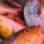 """""""Fishy fishy"""" by Dhonfuthu"""