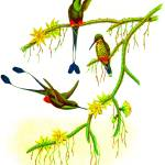 """""""Booted Racket-tail"""" by markkumurto"""
