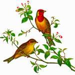 """Red-headed Bunting, Emberiza bruniceps"" by markkumurto"