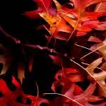 """Fallen Beauty"" by juniperlight"