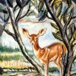 """Baby Deer"" by goellisphoto"