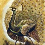 """Peacock"" by goellisphoto"