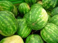 Watermelons – Italy