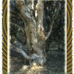 """Peace Tree"" by kiwihighlander"
