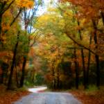 """""""Country Road"""" by DianaLee"""