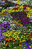 bed of flowers 03