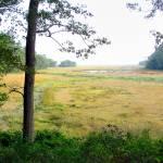 """R Carson wetlands"" by DavidL"
