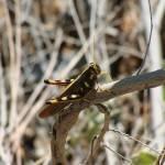 """""""Grasshopper"""" by LivingGaia"""