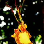 """Psychopsis Orchid"" by BrianMadden"