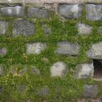 """Moss Covered Wall"" by citybirder"