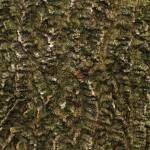 """Common Hackberry Bark"" by citybirder"
