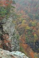 Fall in Cloudland Canyon