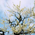 """""""spring sky"""" by jam343"""