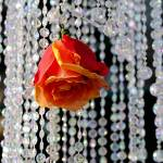 """""""Rosedrip"""" by laphotographie"""