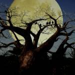 """""""Serengeti"""" by dduhaime55"""