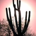 """""""saguaro"""" by BenKimball"""