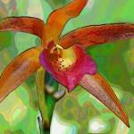 """""""Pastel Orchid 1"""" by LunarImage"""