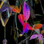"""""""Climbing ivy beside a hanging mirror"""" by DBGCreations"""