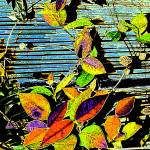 """Venitian Leaves"" by DBGCreations"