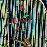 """Bamboo Bird cage"" by DBGCreations"