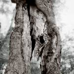 """Old Dead tree"" by Lilykins"