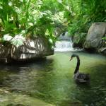 """""""swan in pond"""" by create4fun"""