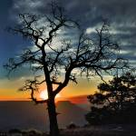 """""""The Tree At Yaki Point"""" by dr_ranch"""