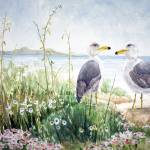 """Two Gulls on the shore"" by sboyle"