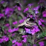 """""""Twilight Dance"""" by PhotosbyTeia"""