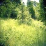 """Green"" by judystalus"