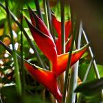 """Bird of Paradise 1"" by davidearljohnson"