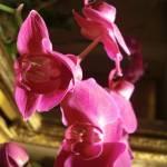 """""""Pink Orchids"""" by artbyaleksandra"""