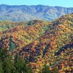 """Smoky Mountain Autumn - Mountain View from Newfoun"" by timseaver"