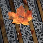 """Leaf On A Bench..."" by KmountMan"