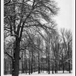 """Snowy Arboretum..."" by KmountMan"